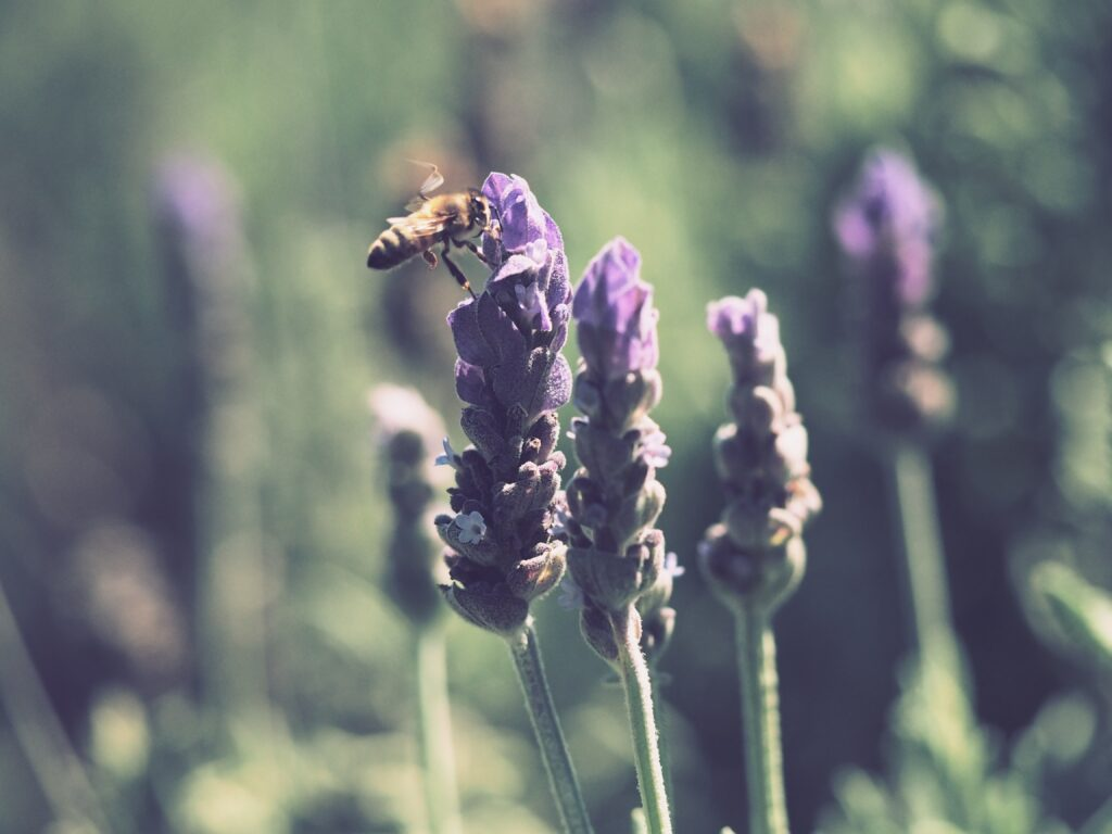 Nutrition + Wellness Services, Dig Deep package, lavender and bee